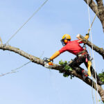 Top Tips When Looking For a Tree Surgeon